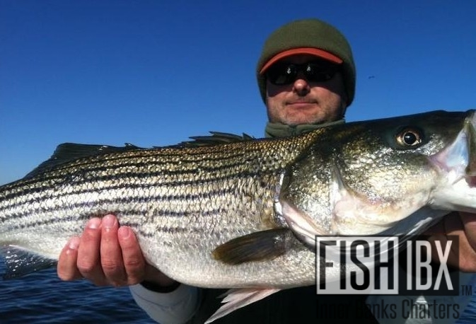 Fishibx catch of the month march 2014 fishibx eastern for Northeast saltwater fishing reports