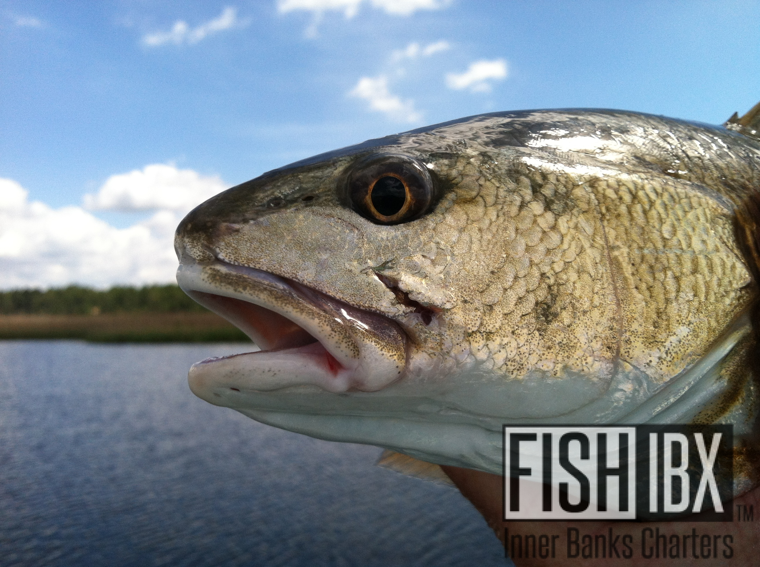 Mix 2 fishibx eastern nc fishing guide for Northeast saltwater fishing reports