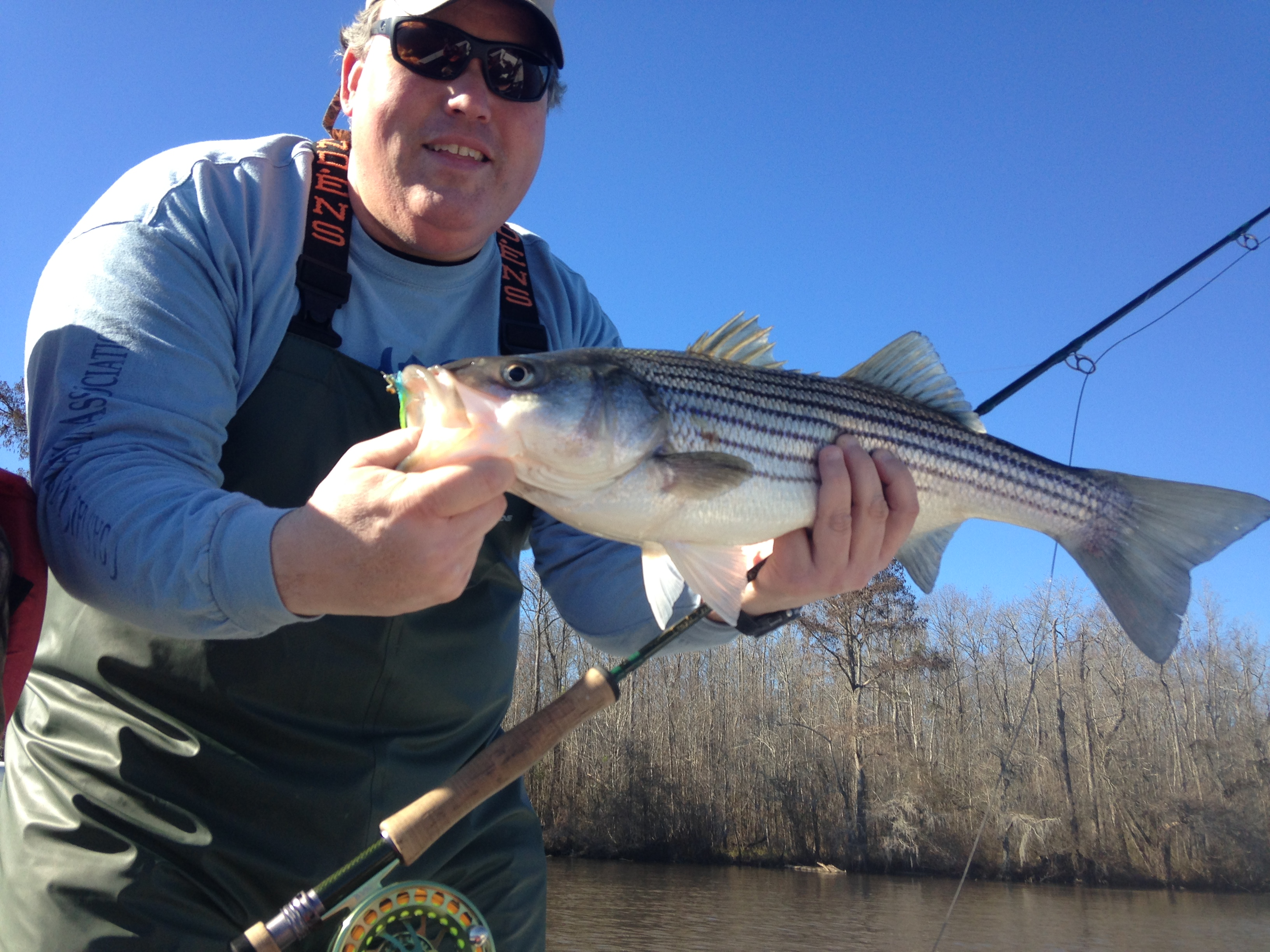 Fly stripers fishibx eastern nc fishing guide for Northeast saltwater fishing reports