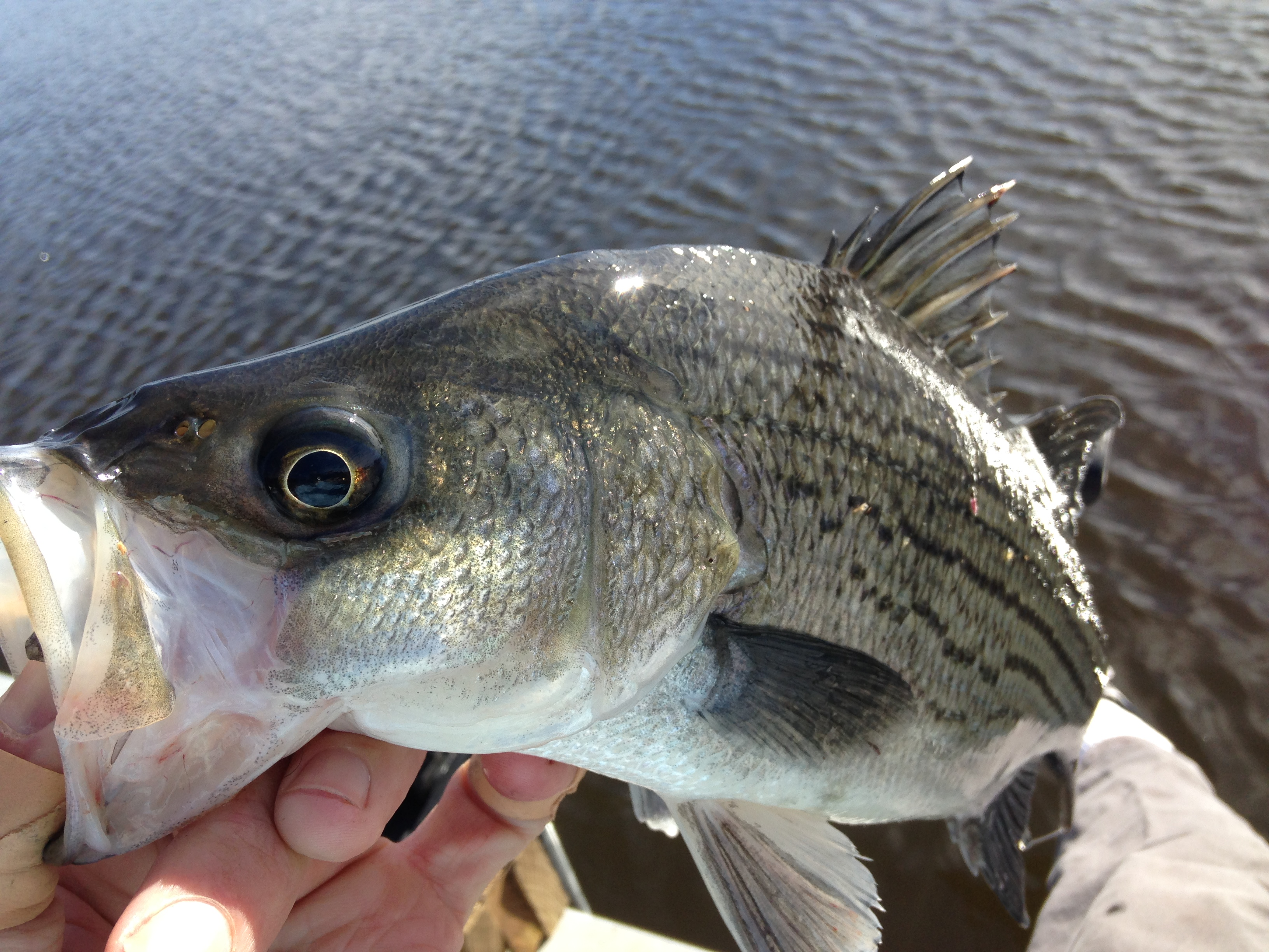 Sweet Water Lake Fishibx Eastern Nc Fishing Guide