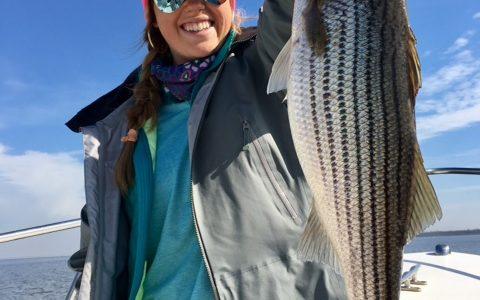 Roanoke Rockfish