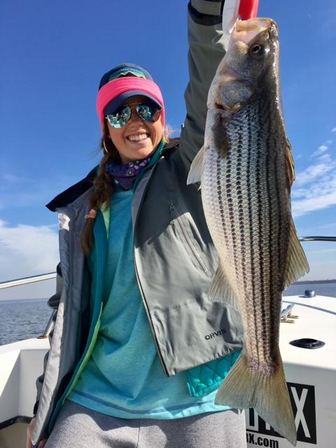 roanoke rockfish fishibx eastern nc fishing guide