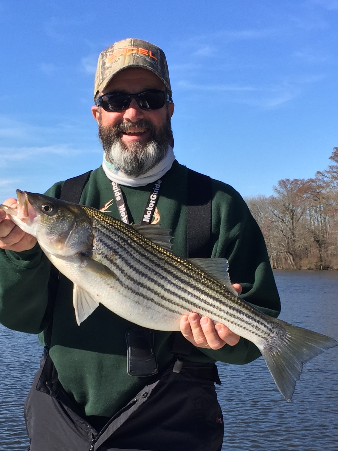 Pamlico tar river stripers fishibx eastern nc fishing guide for Striper fishing nc