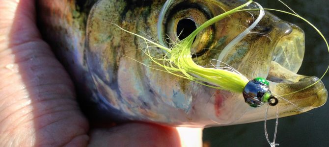 Crushing Shad on the Fly