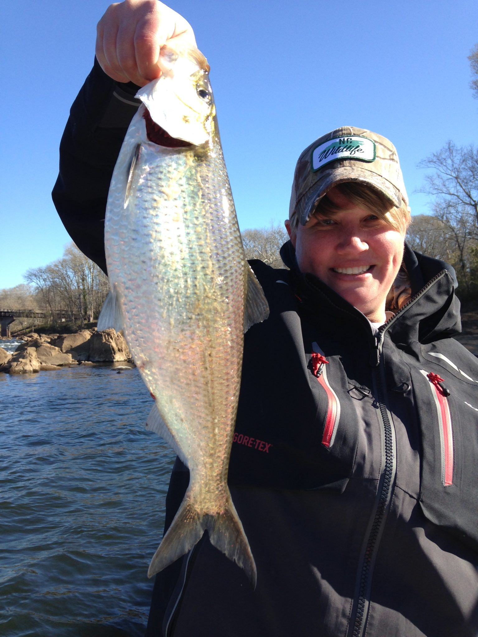 Roanoke river shad fishing fishibx eastern nc fishing guide for Northeast saltwater fishing reports