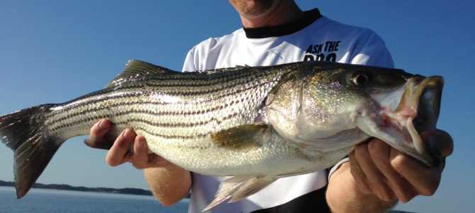 Stripers Open Oct 1!