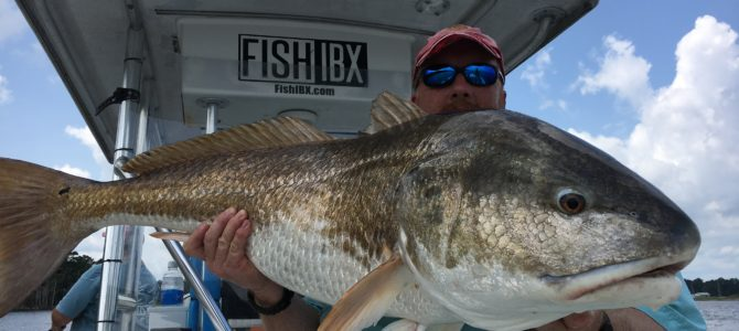 Trophy Red Drum Eat Lures!