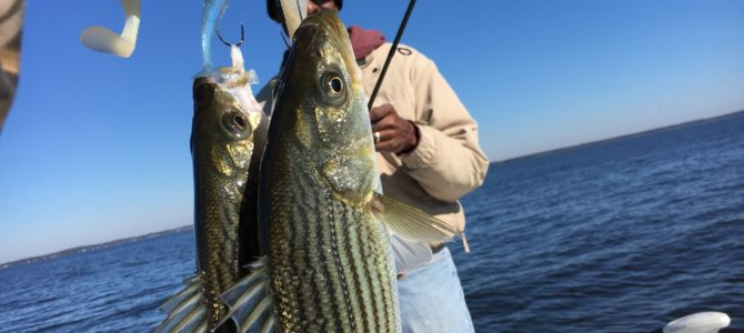 Stripers-Stripers-Stripers!