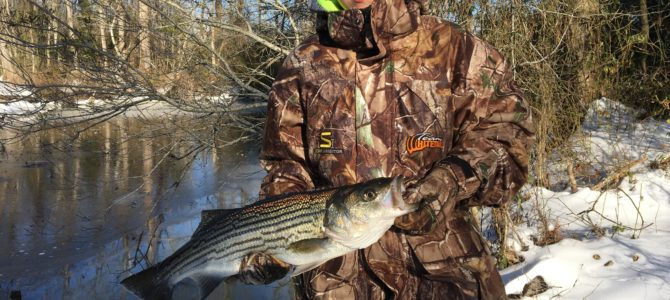 Ice Fishing NC, Crappie, Stripers, Perch